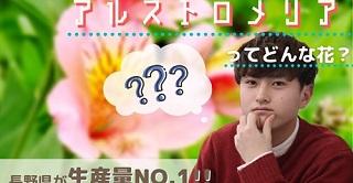 kudo_banner.jpg
